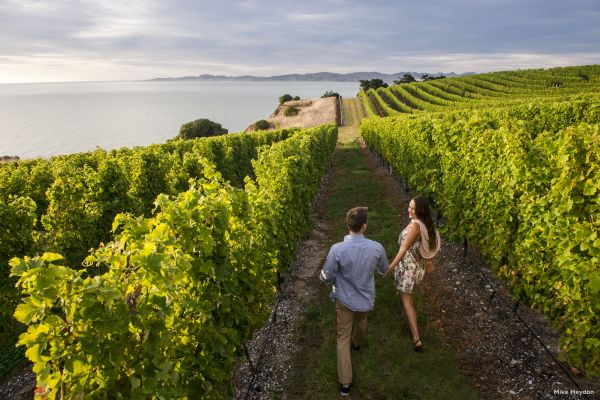 Explore Marlborough Wine Region