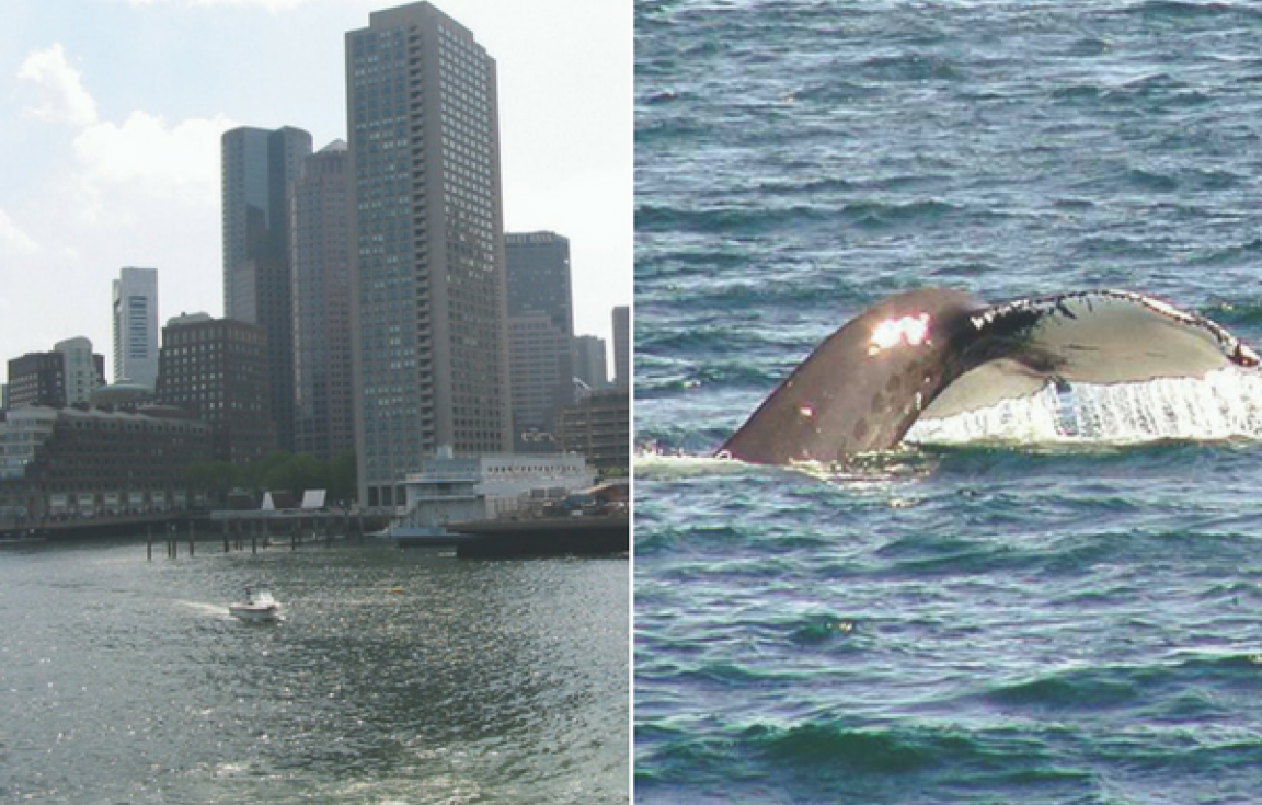 Boston Whale Watching