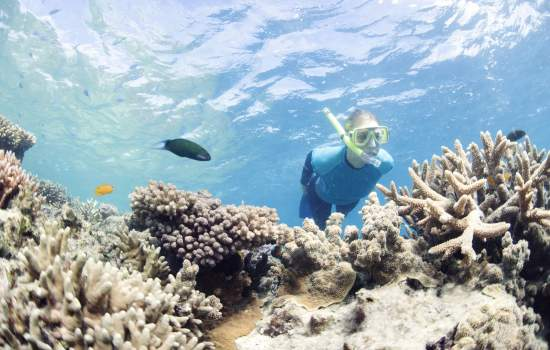 Snorkelling in gbr
